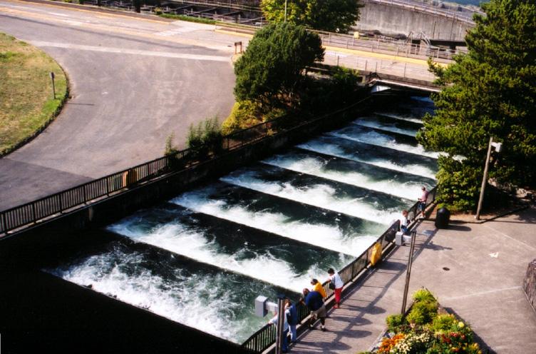 13 fish ladder for Bonneville dam fish camera